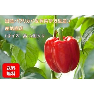 国産パプリカ <佐賀県伊万里産> Lサイズ6個入り 赤 産地直送(送料無料)