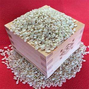 新米H28年産 若狭の恵のお米 いくひかり30kg玄米
