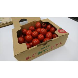 めぐみでぃトマト 1kg 箱入り 若狭の恵 wakasa-megumi
