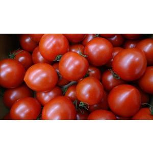 めぐみでぃトマト1kg×2 箱入り|wakasa-megumi