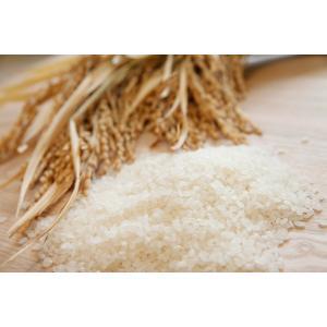 新米 白米5kg H30年福井県産 特別栽培米はなえちぜん 若狭の恵|wakasa-megumi