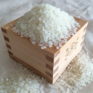 【新米】白米5kg 令和3年 福井県産 特別栽培米こしひかり 若狭の恵|wakasa-megumi