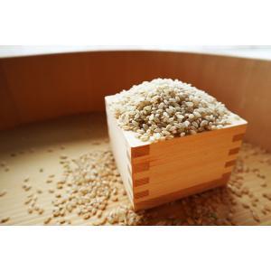 玄米30kg 送料無料 H29年福井県産  特別栽培米こしひかり 若狭の恵|wakasa-megumi