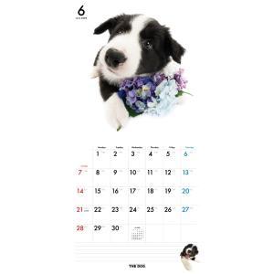 THEDOG カレンダー ボーダーコリー 2020年カレンダー 犬 グッズ 壁掛け|walajin-dog|02