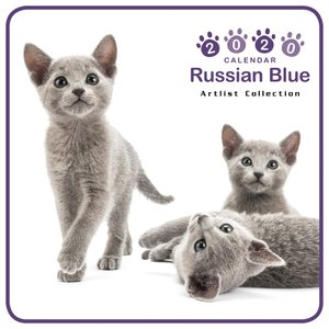THECAT ミニカレンダー ロシアンブルー 2020年カレンダー グッズ 猫|walajin-dog