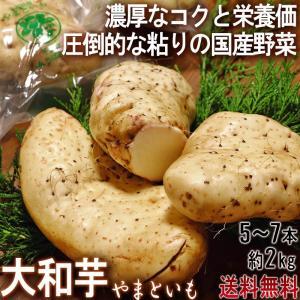 大和芋 やまといも 千葉県産 約2kg 5〜7本 国産野菜 当店一押し商品! 長芋を超える圧倒的な粘...