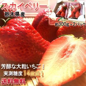 いちご スカイベリー 栃木県産 約300g×2パック とちお...