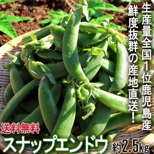 産地直送 スナップエンドウ さやえんどう 1.25kg×2箱同梱 計約2.5kg 鹿児島県産 ほのかな甘みと肉厚でやわらかな歯触り!莢ごと食べる新鮮なえんどう豆