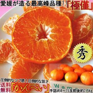 ◆愛媛オリジナルの新品種!高い糖度と食べやすさの「甘平」  甘平は2007年に品種登録されたばかりの...