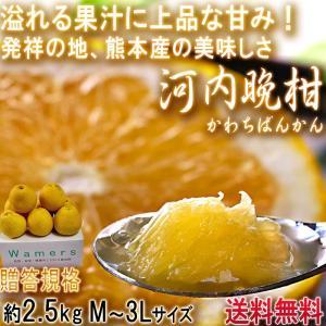 河内晩柑 かわちばんかん 約3kg 熊本県産 贈答規格 JA...