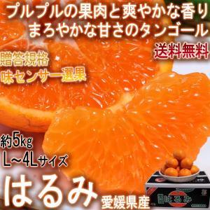 はるみ 約5kg L〜4Lサイズ 愛媛県産 秀品 JA全農えひめ 贈答可能 プチプチの食感と食べ易さ...