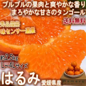 はるみ 約2.5kg L〜4Lサイズ 愛媛県産 秀品 JA全...