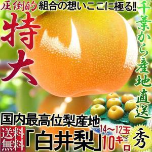 白井梨 幸水・豊水・秋月・新高 約10kg 14〜28玉 千...