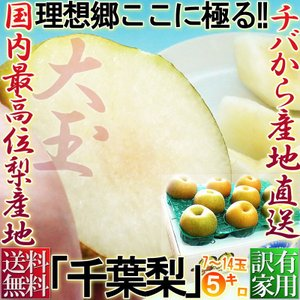 千葉梨 約5kg 7〜14玉 大玉限定 訳あり品 幸水・豊水...