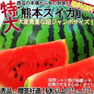 ◆出荷量日本一の大産地、熊本県のスイカづくり  熊本県は全国一位のすいか出荷量を誇る大産地です。  ...