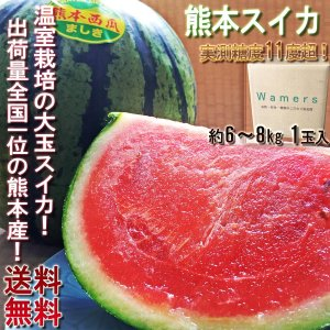 熊本スイカ 大玉 熊本県産 紅肉 約6〜8kg 1玉入り 贈答規格 実測糖度11度超! 温室栽培の大...