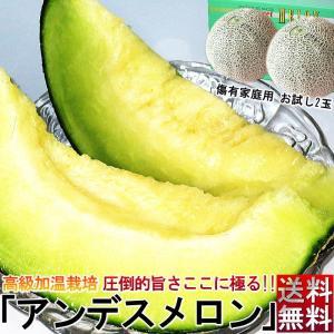 熊本県はメロンの生産量が国内第2位で、その中でもJA熊本うきは様々な種類のメロンを栽培している産地...