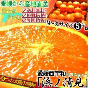 産地直送 清見オレンジ 約5kg 愛媛 西宇和産 八幡浜エリ...