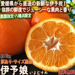 産地直送 伊予娘 いよかん 約10kg サイズ混合 愛媛県産...