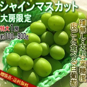 ◆皮ごと食べる高い糖度の種無し白葡萄「シャインマスカット」!  シャインマスカットはTVでも放送され...