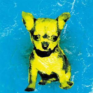 【BOW COLOR blue】 チワワ 10by10 STYLE (インテリア/雑貨/犬)|wan-nyan-gallery