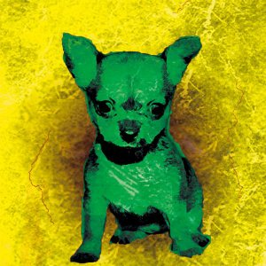 【BOW COLOR yellow】 チワワ 10by10 STYLE (インテリア/雑貨/犬)|wan-nyan-gallery