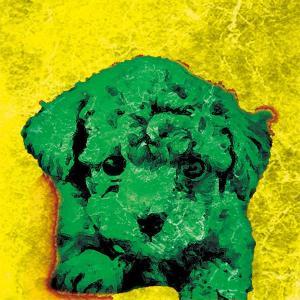 【BOW COLOR yellow】 トイプードル 10by10 STYLE (インテリア/雑貨/犬)|wan-nyan-gallery