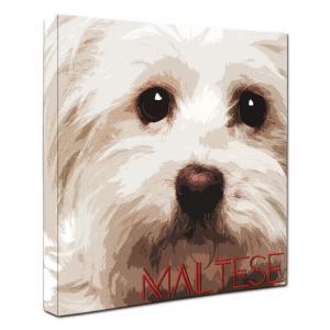 【IMPACT -color-】 マルチーズ Lサイズ ワンにゃんアートキャンバス (絵画/犬/インテリア雑貨/グッズ)|wan-nyan-gallery