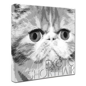 【IMPACT -shirokuro-】 エキゾチックショートヘア Mサイズ ワンにゃんアートキャンバス (絵画/猫/インテリア雑貨/グッズ) wan-nyan-gallery
