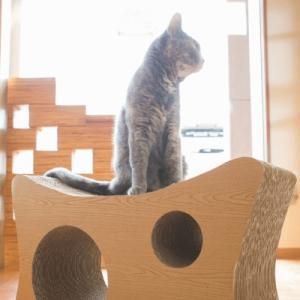 ニコネコ ウッド NicoNeko 爪とぎベッド 猫の爪とぎ|wan-nyan-olive|05