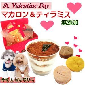犬用 バレンタインデー チョコレート風味 ティラミス マカロ...