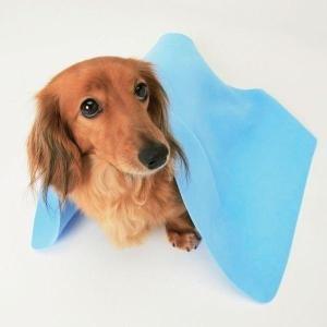 超吸水ペット用タオル Mサイズ  CKT-M ブルー