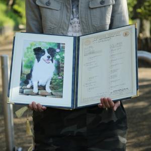 大切な物こそ写真と一緒に飾りましょう。血統書ホルダー(写真付き)|wanpla