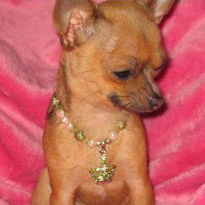 犬のアクセサリー【CrownGreen ネックレス】ペット用アクセサリー/犬のネックレス/犬グッズ/犬用品|wanwan3dogs