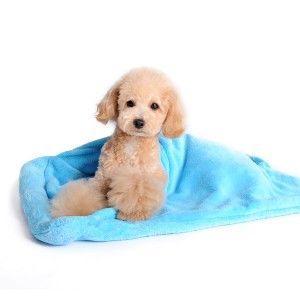 犬のブランケット【潜れるブランケットベッド】|wanwan3dogs