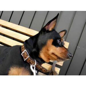 中型犬対応♪犬の首輪【Leopard Fur】かっこいいヒョウ柄ペット首輪/お散歩犬グッズ|wanwan3dogs|05