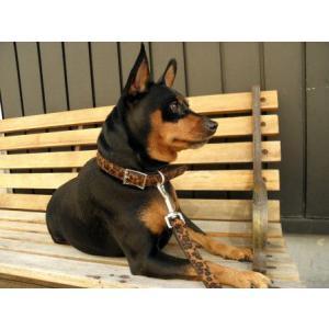 中型犬対応♪犬の首輪【Leopard Fur】かっこいいヒョウ柄ペット首輪/お散歩犬グッズ|wanwan3dogs|06
