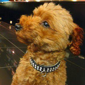 犬の首輪【Celebrity Black】ラインストーン 首輪|wanwan3dogs