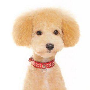 犬の首輪【Celebrity Red】ラインストーン 首輪|wanwan3dogs