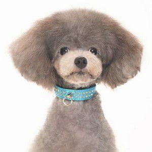 犬の首輪【Celebrity Blue】ラインストーン 首輪|wanwan3dogs