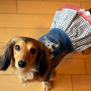 犬のデニムスカート【Skull dress】犬服/犬の洋服/ペット服/ドッグウェア|wanwan3dogs