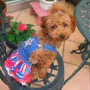 犬のデニムスカート【Stars and stripes】 犬服\犬の洋服/ペット服/ドッグウェア|wanwan3dogs