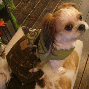 トップ次第で色々楽しめちゃう♪サスペンダー付き犬のデニム【ブラウン_デニムジーンズ】 犬服/犬の洋服/モンキーデイズ|wanwan3dogs