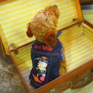 犬のデニムジャケット【BETTY BOOP Born Wild】犬のGジャン/バイカージャケット/ベティちゃん/ベティグッズ/犬服|wanwan3dogs