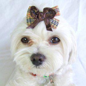 犬のヘアーアクセサリー【Brown リボン】ヘアピン/ペットアクセサリー/ラインストーン/犬グッズ/犬用品 wanwan3dogs