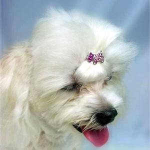 犬のヘアーアクセサリー【スワロフスキーヘアピン-Doggie】ヘアピン/ペットアクセサリー/ラインストーン/犬グッズ/犬用品 wanwan3dogs
