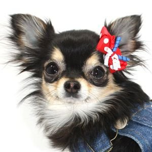 犬のヘアーアクセサリー【Red Confetti ヘアゴム】ペットアクセサリー/リボン/犬グッズ/犬用品|wanwan3dogs