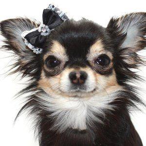 犬のヘアーアクセサリー【Black パール ヘアゴム】ペットアクセサリー/リボン/犬グッズ/犬用品 wanwan3dogs