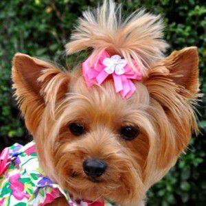 犬のヘアーアクセサリー【Fuchsia Flower ヘアークリップ】ペットアクセサリー/犬グッズ/犬用品|wanwan3dogs