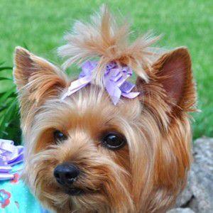犬のヘアーアクセサリー【Lavender Flower ヘアークリップ】ペットアクセサリー/犬グッズ/犬用品|wanwan3dogs